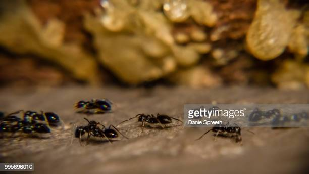 rush hour! - african wasp stock pictures, royalty-free photos & images