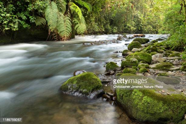 rushing river - christopher jimenez nature photo stock pictures, royalty-free photos & images