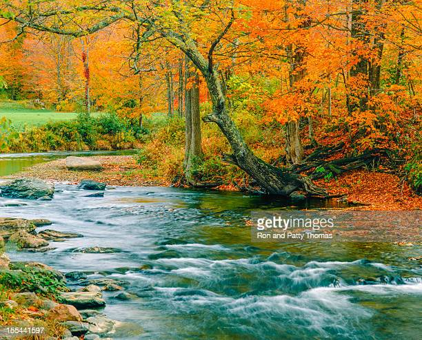 Rushing Stream And Autumn Color, Vermont