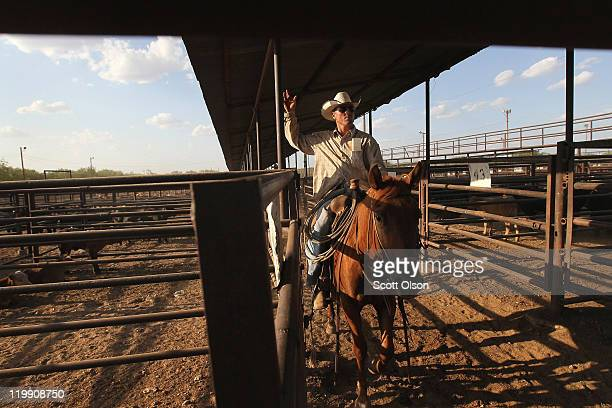 Russell Sperry helps to move cattle into pens after they had been sold at the Abilene Livestock Auction July 26 2011 in Abilene Texas A severe...