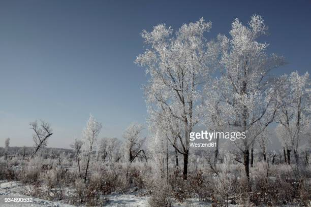 Russia, Amur Oblast, landscape in winter