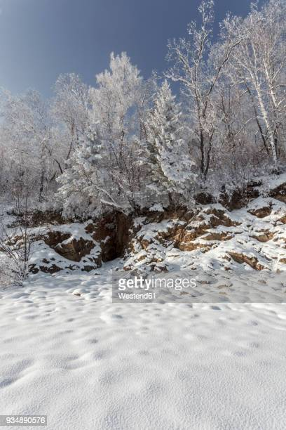 Russia, Amur Oblast, snow-covered nature