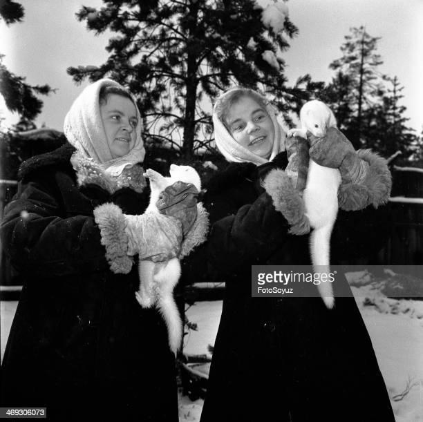 Russia Dalny Vostok Sakha 1940s A fur farm in the village of Pokrovskoe Yakutia 1949