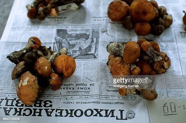 Russia Khabarovsk Market Scene Mushrooms For Sale