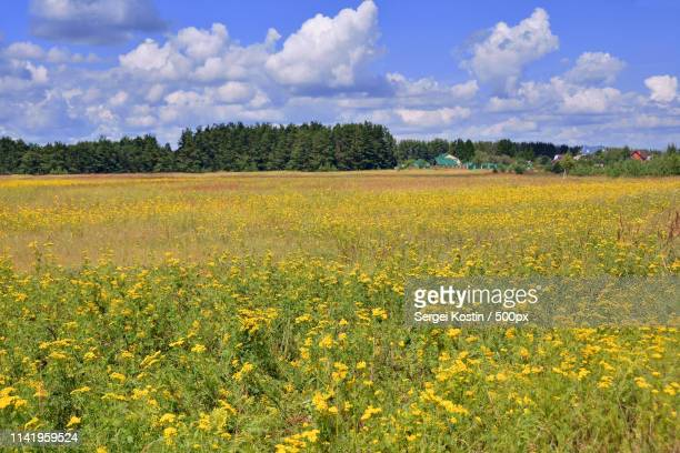 russia russian field - sergei stock pictures, royalty-free photos & images
