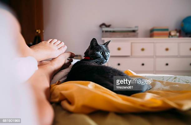 russian blue lying on bed besides feet of owner watching somrehing - human leg stock photos and pictures
