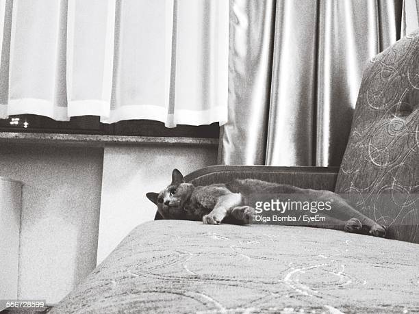 Russian Blue Resting On Sofa At Home