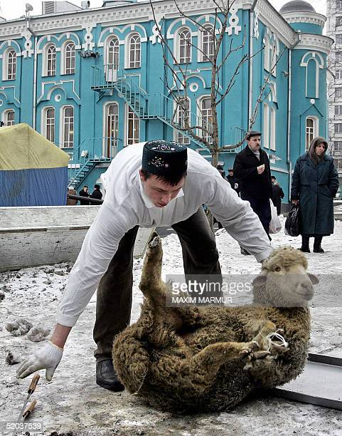 Russian Muslim prepares to slaughter a sheep to mark the first day of the Moslim feast of Eid alAdha outside the main Mosque in Moscow 20 January...