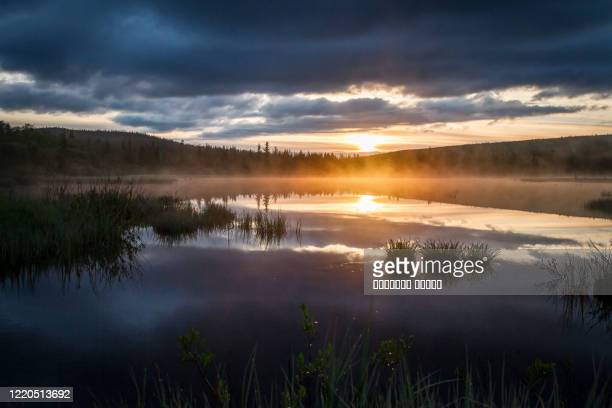 russian northern landscape. kola peninsula, the arctic. murmansk region. swamp with morning haze at sunrise - swamp stock pictures, royalty-free photos & images
