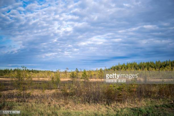 russian northern landscape. kola peninsula, the arctic. murmansk region - tundra stock-fotos und bilder