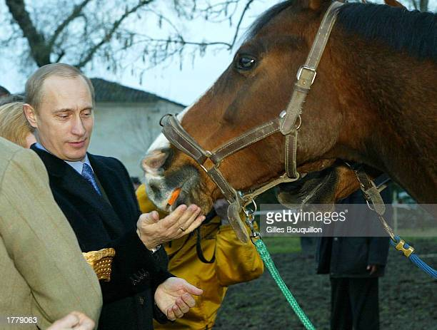Russian President Vladimir Putin feeds a horse February 12, 2003 in Saint Emilion, France. The horse is one of two horses offered by the King of...
