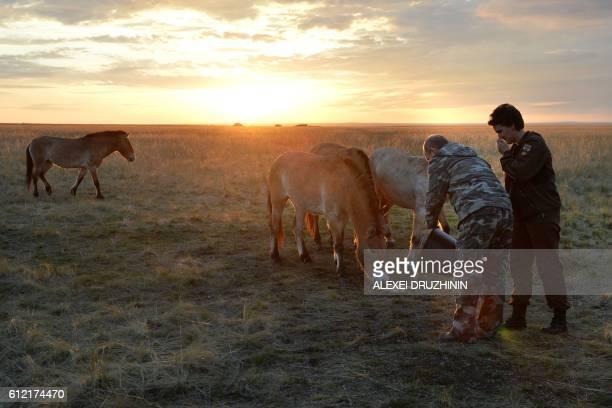 Russian President Vladimir Putin visits Russia's Przewalski horse reintroduction centre in the Orenburg Reserves, near the border with Kazakhstan, on...