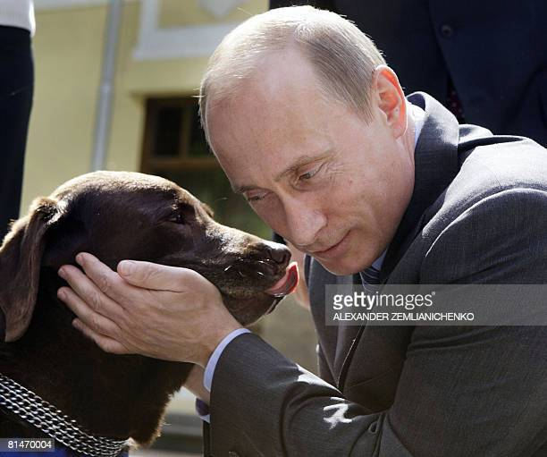 Russian Prime Minister Vladimir Putin pets Labrador Tonik during his meeeting with Russian rescue workers in the NovoOgaryovo residence outside...