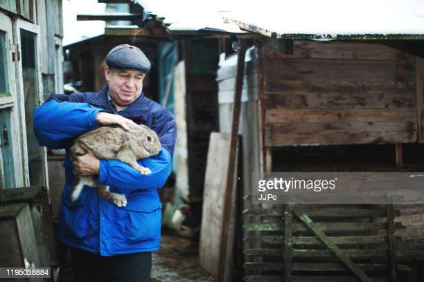 russian rabbit breeder working at his farm - meat packing stock pictures, royalty-free photos & images