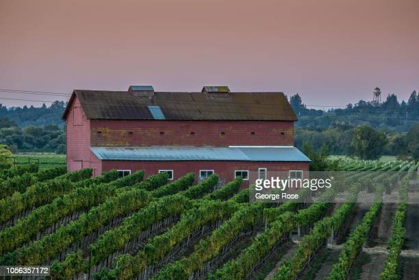 Russian River Valley barn and vineyard is viewed on September 21 near Healdburg California A cool spring and mild summer have contributed to a...