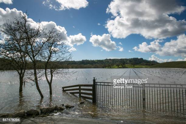 Russian River Valley vineyard is still under water due to flooding as viewed on February 23 near Healdsburg California After record rainfall battered...
