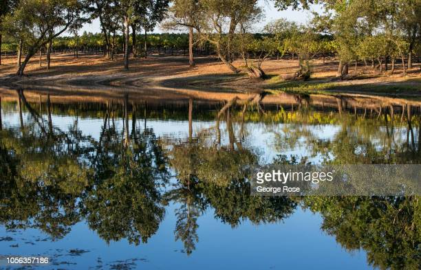 Russian River Valley vineyard pond is viewed on September 21 near Healdburg California A cool spring and mild summer have contributed to a...