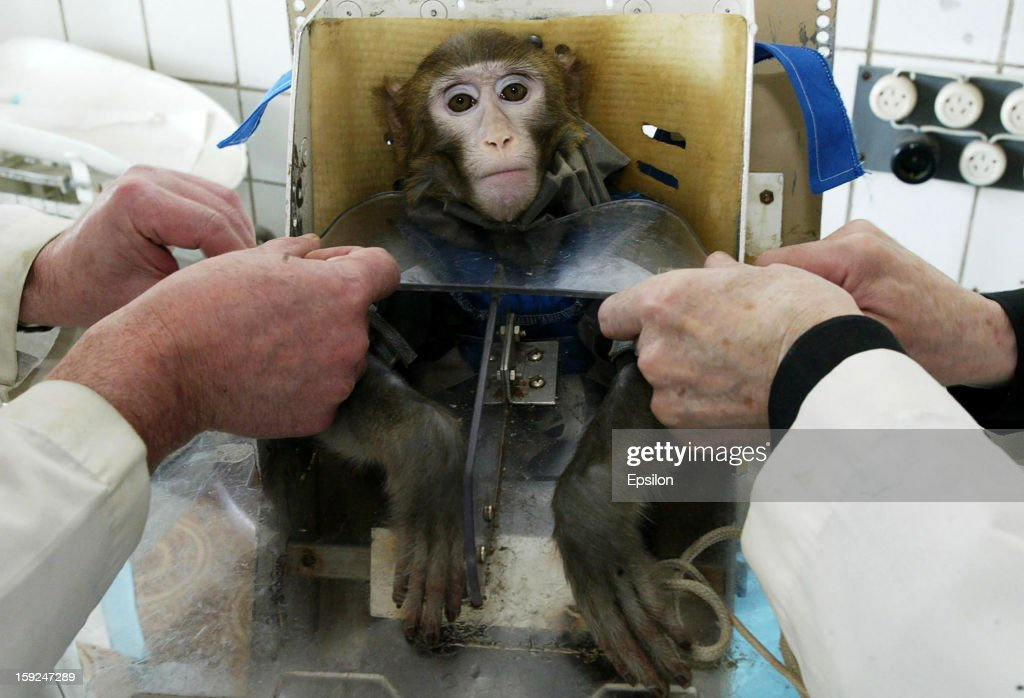 Russian Scientists Test Health Effects Of Life In Space On Monkeys : News Photo