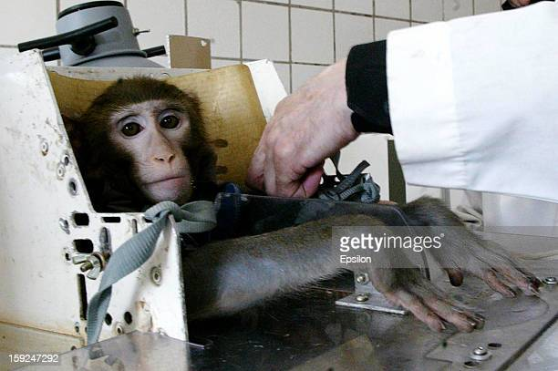 Russian scientists prepare monkey during testing at the Medical and Biological Problems Laboratory on April 15 2003 in outside Moscow Russia Russian...