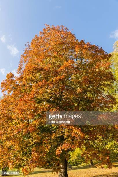 rust colored autumn color - rust colored - fotografias e filmes do acervo