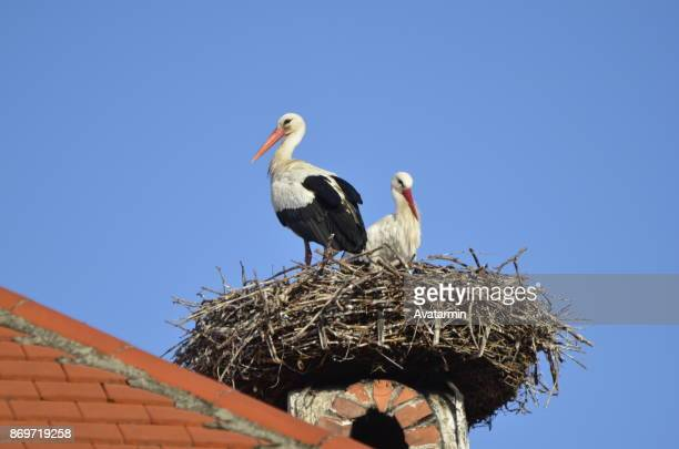Rust - stork in nest at roof of a house