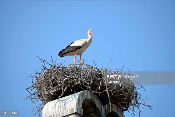 rust - stork - birds nest stock photos and pictures
