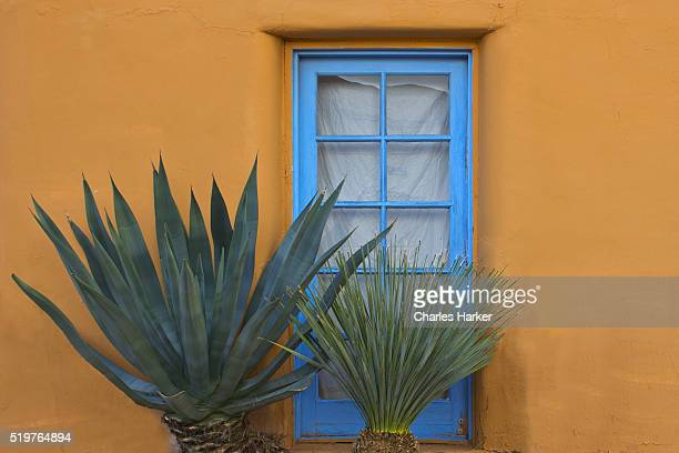 Rustic Adobe Doorway with Cactus in Arizona