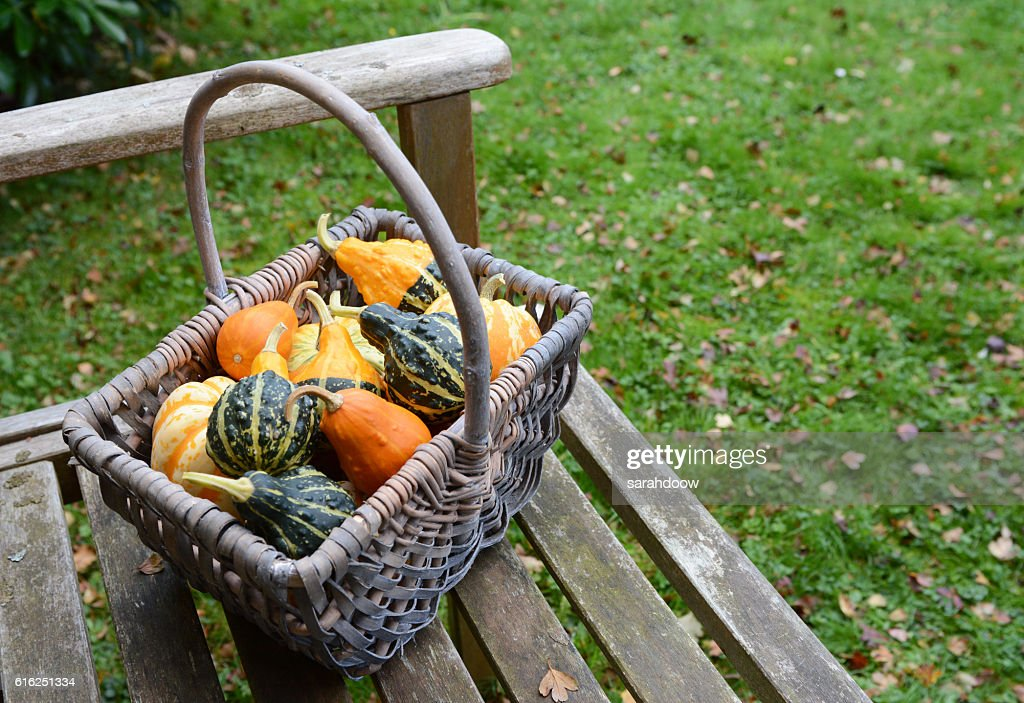 Rustic basket filled with a selection of ornamental gourds : Stock Photo
