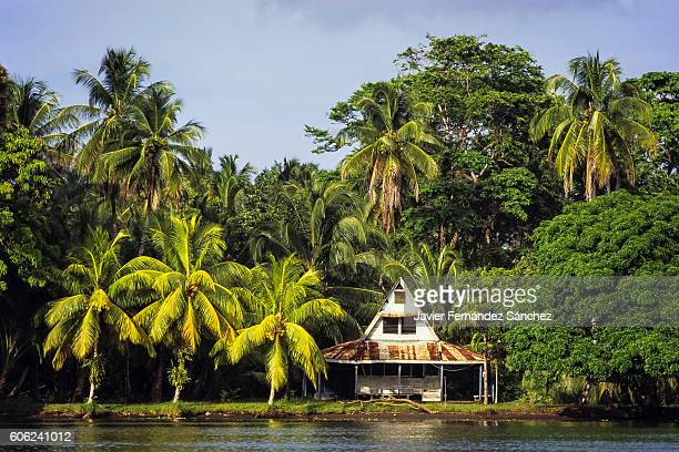 a rustic cottage among coconut palms and tropical forest on the edge of a canal tortuguero national park in costa rica. - costa rica stock pictures, royalty-free photos & images