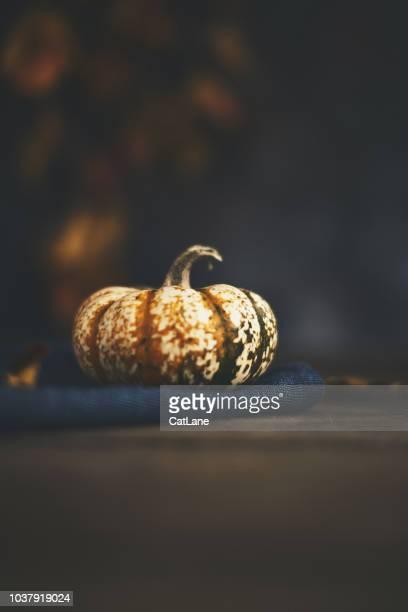 Rustikale Herbst Stillleben Hintergrund mit gesprenkelten Kürbis