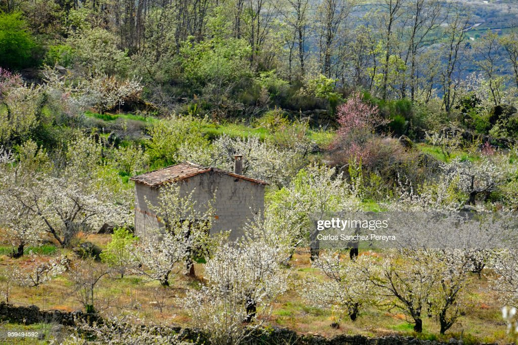 Rustic house in Jerte Valley : Stock Photo