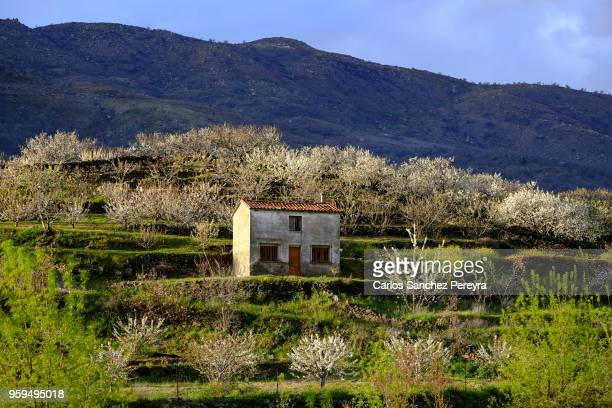 rustic house in jerte valley - caceres stock pictures, royalty-free photos & images