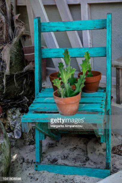 Rustic style wooden turquoise chair with 3 cactus pots