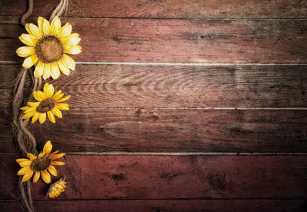 Rustic Sunflowers And An Old Barn Wood Door Background Horizontal