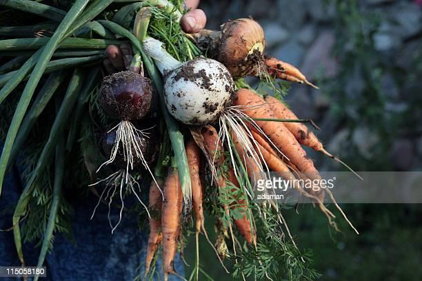 Rustic Vegetables