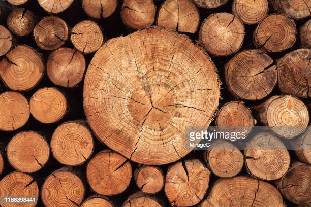 rustic weathered wood logs - tree trunk stock pictures, royalty-free photos & images