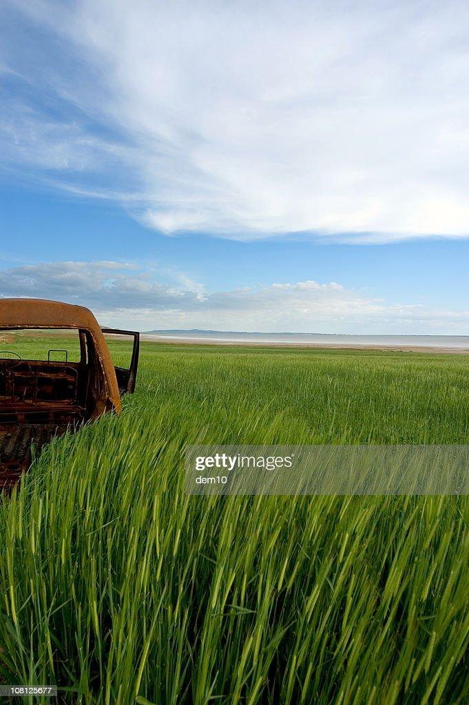 tall green grass field. Rusty Car Sitting In Tall Green Grass Field : Stock Photo I