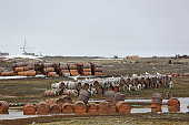 rusty fuel chemical drums arctic coast
