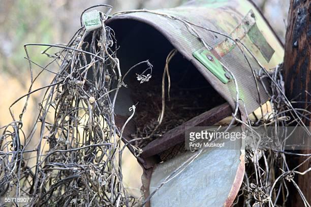 rusty mailbox with bird nest - 国立オリンピック競技場 ストックフォトと画像