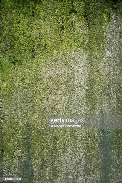 rusty stone wall green texture background - moss stock pictures, royalty-free photos & images