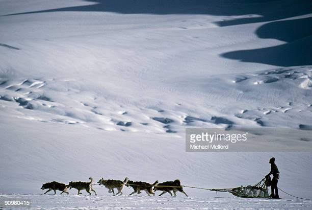 a dogsledder travels across the snow on ruth glacier. - dog sledding stock photos and pictures