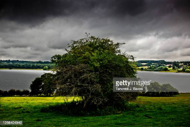 rutland water - bavosi stock pictures, royalty-free photos & images