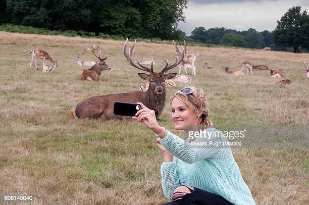rutting season selfie - 2016 - red deer animal stock pictures, royalty-free photos & images
