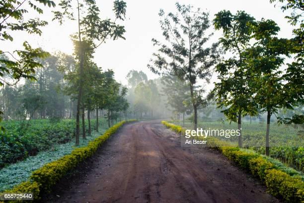 Rwandan Sunrise