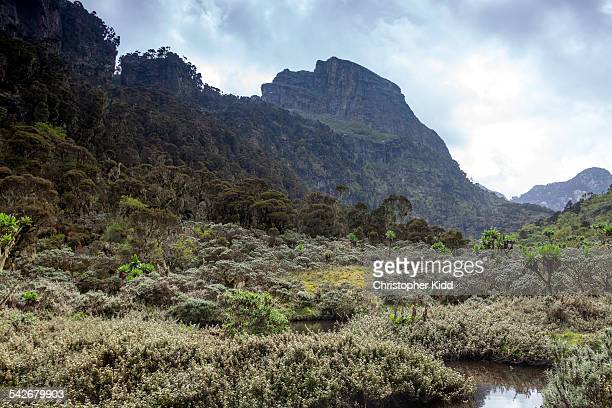 Rwenzori Mountain National Park