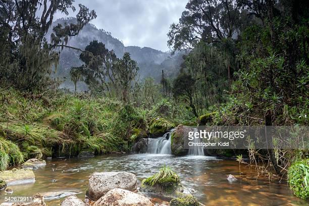 Rwenzori Mountains National Park, Uganda