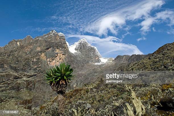 Rwenzori-Mondgebirge zwischen Uganda und Kongo