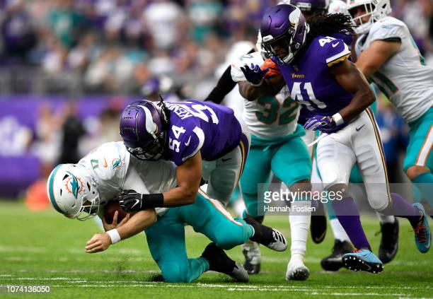 Ryan Tannehill of the Miami Dolphins is sacked by Eric Kendricks of the Minnesota Vikings in the third quarter of the game at U.S. Bank Stadium on...