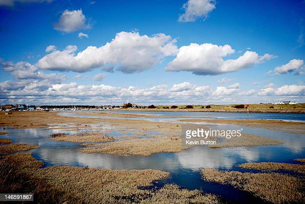 rye harbour - nature reserve stock pictures, royalty-free photos & images