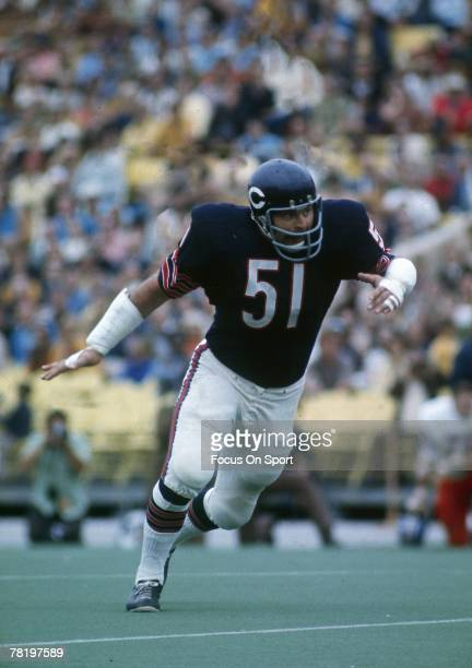 S: Dick Butkus of the Chicago Bears at middle linebacker in a circa early 1970's NFL football game at Soldier field in Chicago, Illinois.